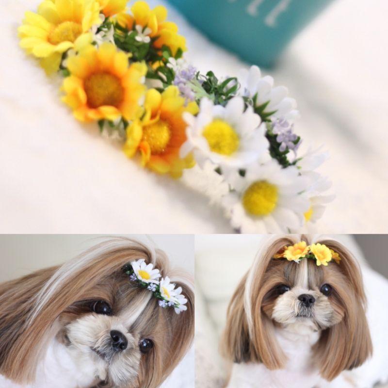 画像1: デージー♡ちょんまげ花かんむり・Sサイズ♡2color