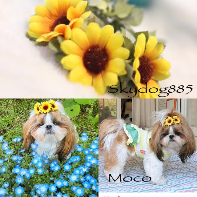 画像1: イエローデージー♡ちょんまげ花かんむり・SSサイズ♡