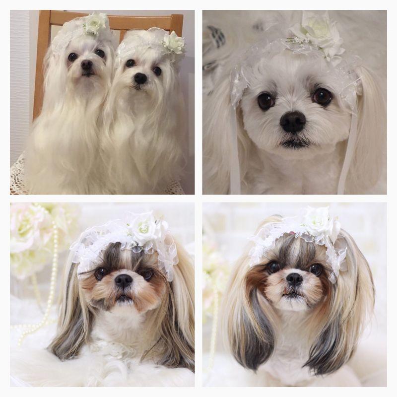 画像1: White wedding♡カチューシャバレッタ