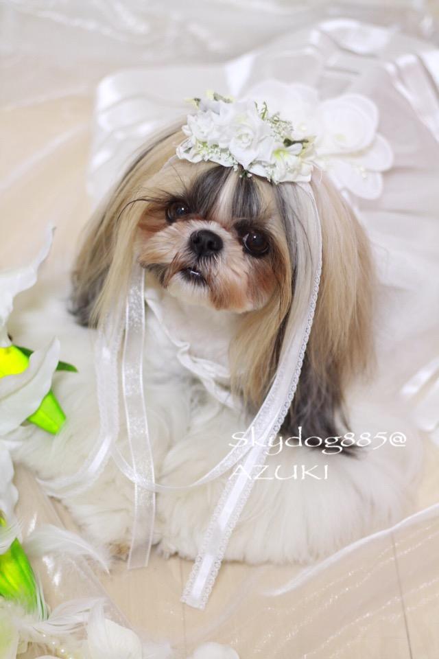 画像1: White wedding♡ティアラデザイン&ロングリボン・バレッタ