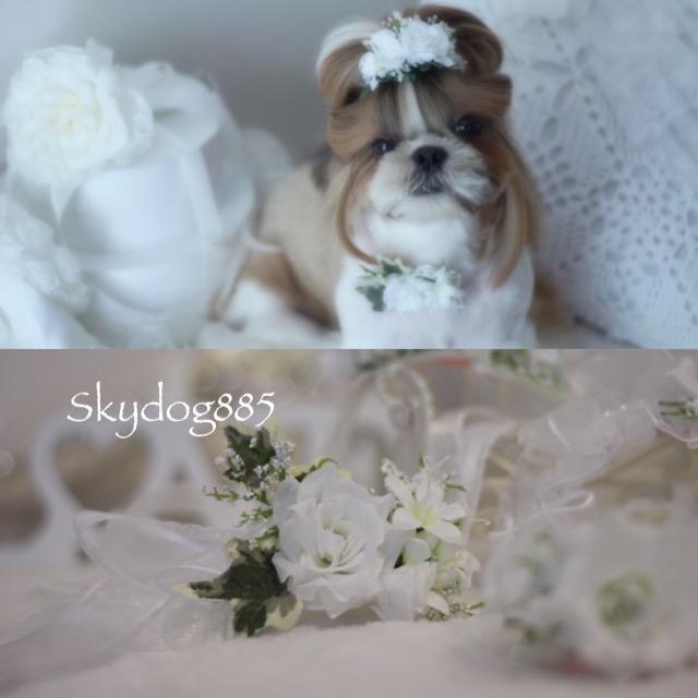 画像1: White wedding ♡チョーカー