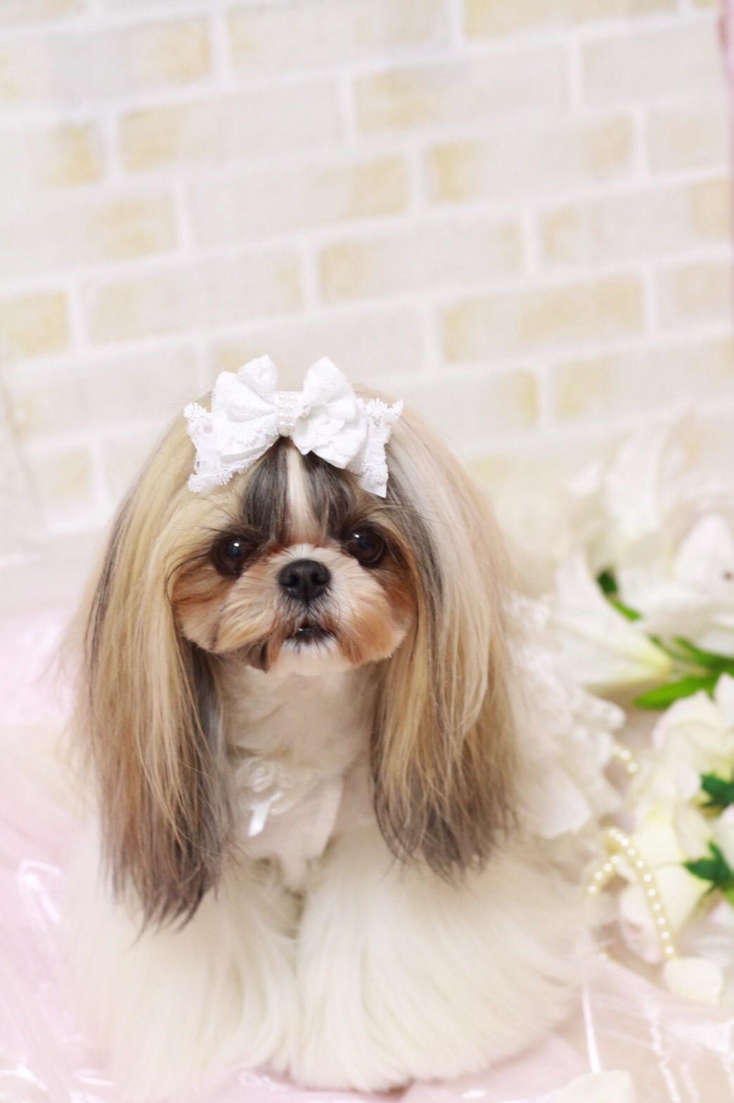 画像1: White wedding♡ウエディングレースstanding ribbon♡