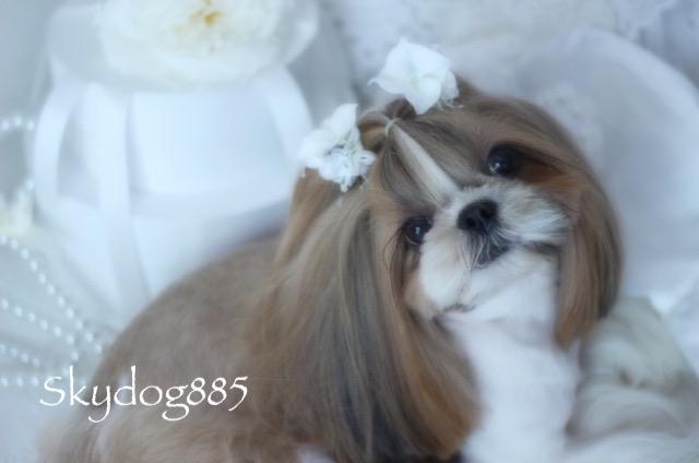 画像1: White wedding♡ ハイドランジア&リリーflowerゴム♡1個