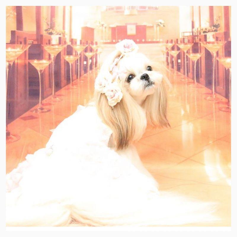 画像1: princess♡ローズ ♡ ロングリボン♡カラー選択