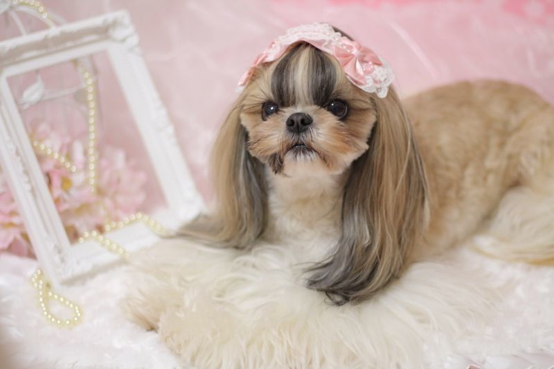 画像1: Lovely Lolita pink♡ヘッドドレスバレッタ(大)