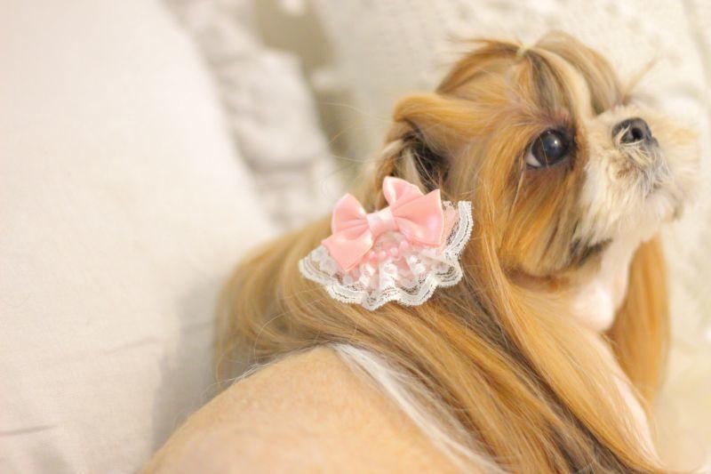 画像1: Lovely Lolita pink♡ゴム