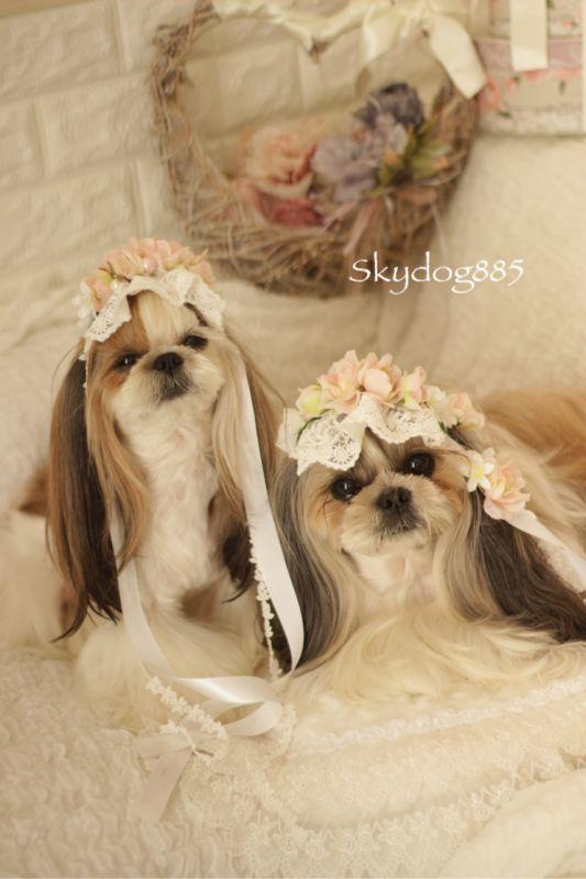 画像1: garden wedding pink rose 2019 ♡ リボン付きヘッドドレス♡size選択(写真左側)
